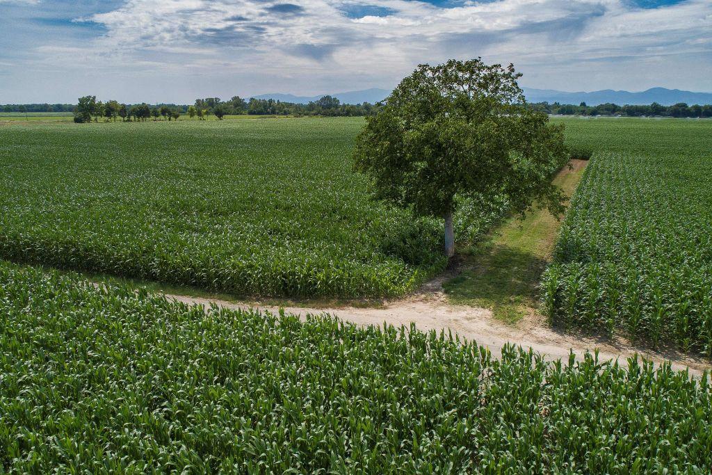 Valore terreno agricolo